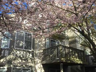 Townhouse for sale in Terra Nova, Richmond, Richmond, 57 3880 Westminster Highway, 262378489 | Realtylink.org