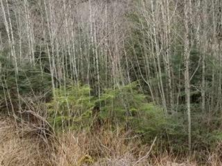 Lot for sale in Prince Rupert - City, Prince Rupert, Prince Rupert, Lts 4--9 E 7th Avenue, 262486609   Realtylink.org