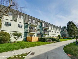 Apartment for sale in South Arm, Richmond, Richmond, 176 8160 Williams Road, 262577698   Realtylink.org