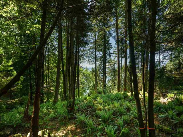 Lot for sale in Lions Bay, West Vancouver, 350 Mountain Drive, 262481083 | Realtylink.org
