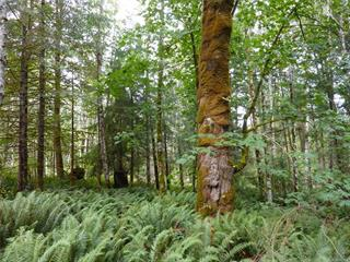 Lot for sale in Quadra Island, Quadra Island, SL 11 950 Heriot Bay Rd, 853554 | Realtylink.org