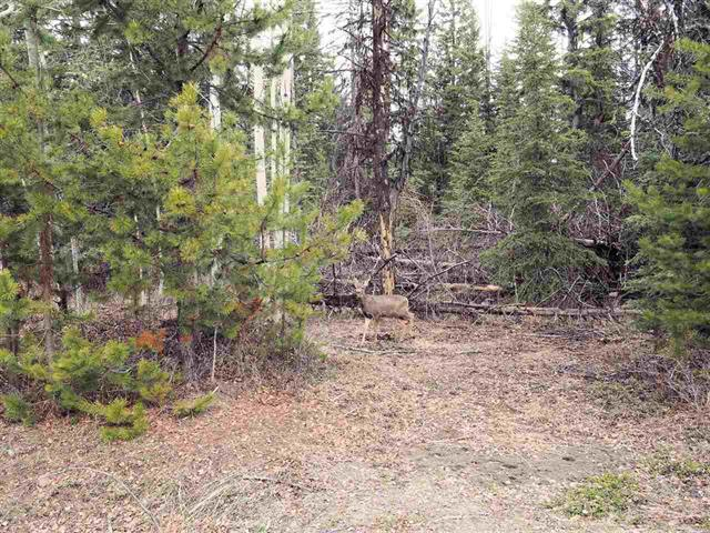 Lot for sale in Deka/Sulphurous/Hathaway Lakes, Deka Lake / Sulphurous / Hathaway Lakes, 100 Mile House, Lot 216 Ludlom Road, 262419473 | Realtylink.org