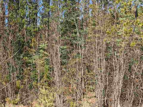 Lot for sale in Cluculz Lake, PG Rural West, Lot 58 W Meier Road, 262384556 | Realtylink.org