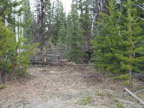 Lot for sale in Deka/Sulphurous/Hathaway Lakes, Deka Lake / Sulphurous / Hathaway Lakes, 100 Mile House, Lot 216 Ludlom Road, 262314273   Realtylink.org
