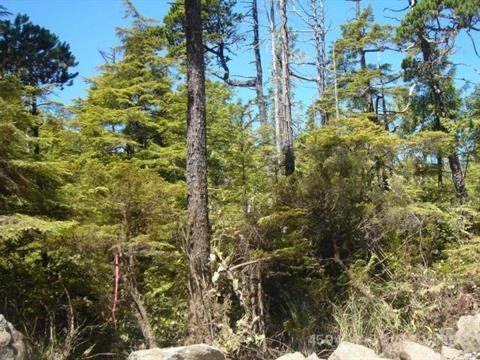 Lot for sale in Ucluelet, PG Rural East, 1311 Edwards Place, 459422 | Realtylink.org