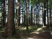 Lot for sale in Masset, Prince Rupert, Lot 8 Limber Lost Place, 262435839 | Realtylink.org