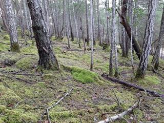 Lot for sale in Mudge Island, NOT IN USE, Lot 137 Coho Blvd, 464235 | Realtylink.org